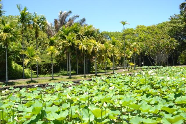 Jardin pamplemousse ile maurice