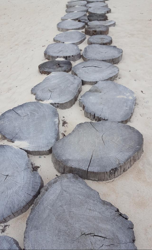 Baie des tortues Luth Gabon