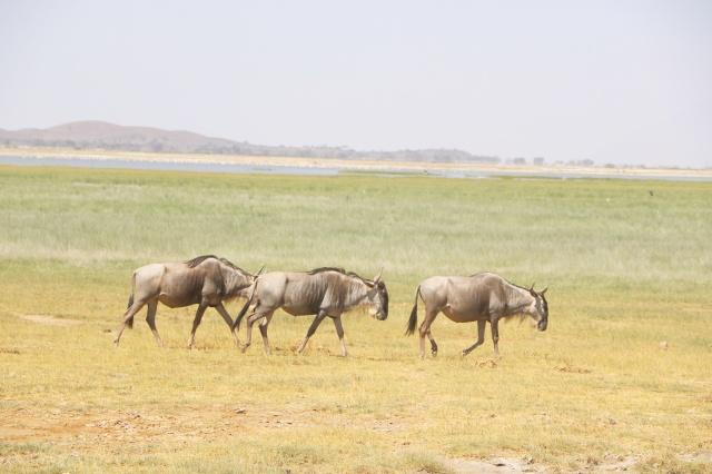 Amboseli (15)