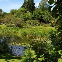 jardin-botanique-copenhague (1)